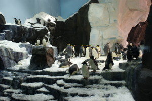Antarctica Penguin Viewing