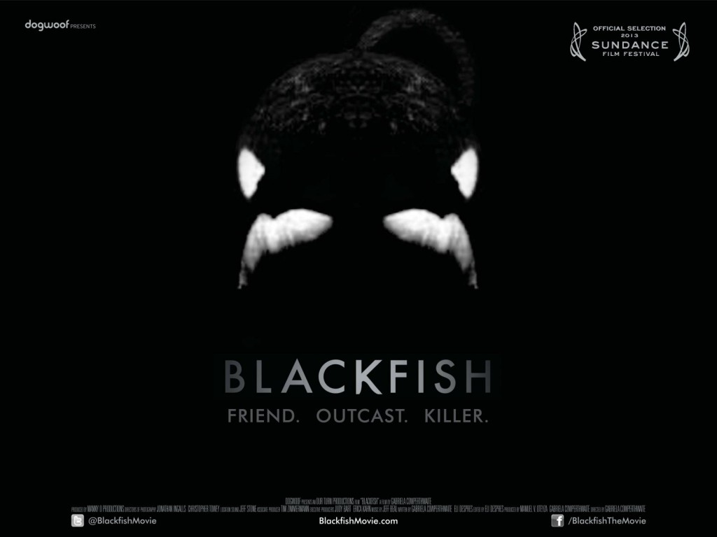 Copyright Blackfish