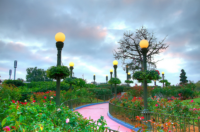 Magic Kingdom Rose Garden