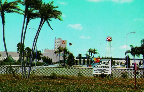 Images Of Modern America: Busch Gardens Tampa Bay Gives An Excellent  Photographic Journey On How The Park Has Blossomed Over The Years. As Many  Of You Know, ...
