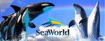 How Does Sea World Entertainment Turn Around?